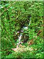 SE1289 : Waterfall, Harmby Gill Woods by David Dixon