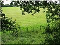 SO8694 : Rabbit Field by Gordon Griffiths