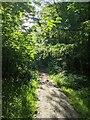 TF0820 : Morning sunshine by Bob Harvey
