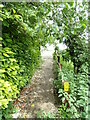 TL8838 : Footpath to the B1508 Bures Road by Geographer