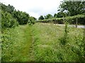 ST7170 : The Cotswold Way beside Beach Wood by Philip Halling