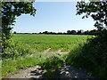 TG3625 : Entrance to Sugar Beet field by David Pashley