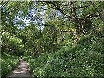 SP3665 : HS2 enabling works, Welsh Road area, June 2021 (5) by Robin Stott