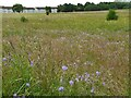 NS6267 : Meadow, Robroyston Park by Richard Sutcliffe