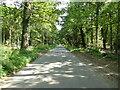 TG1838 : Long straight Road through Woodland by David Pashley
