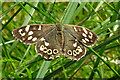 NJ5441 : Speckled Wood Butterfly (Pararge aegeria) by Anne Burgess