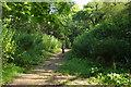 ST5577 : Path, Coombe Dingle by Derek Harper