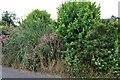 TL6899 : Bushes on Church Road, Wretton by David Howard