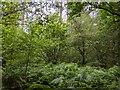 TF0820 : In the Green by Bob Harvey