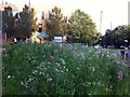 SP3379 : Urban wildflower meadow, Hillfields, Coventry by Alan Paxton