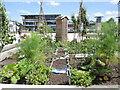ST5872 : A mixture of urban herbs by Neil Owen