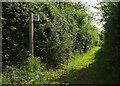 SX8458 : Unmetalled road, Aish by Derek Harper