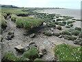 SD3474 : The edge of the saltmarsh, near Canon Winder by Christine Johnstone