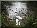 TQ6853 : The Old Mill Pond, Wateringbury by Marathon