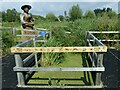 ST4286 : Pond dipping area, Magor Marsh by Robin Drayton