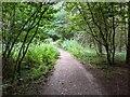 TF0720 : Forest path by Bob Harvey