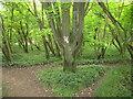 SU7594 : Chiltern Way in Commonhill Wood by David Hawgood