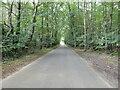 TG2628 : North on Skeyton Road by David Pashley