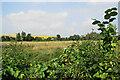 SU4620 : Unused field near Eastleigh by Bill Boaden