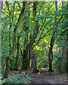 TL7806 : Looking back to Pheasanthouse Wood by Roger Jones