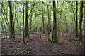 TQ5951 : Point Wood (Dene Park) by N Chadwick