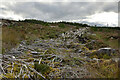 NH4896 : Cleared Forestry in Inveroykel Wood, Ross-shire by Andrew Tryon