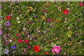 TL8161 : Wild flowers in the walled garden, Ickworth by Christopher Hilton