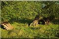 SP1240 : Willows, Weston-Sub-Edge by Derek Harper
