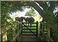 SP0633 : Cotswold Way north of Stanway by Derek Harper