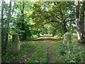 SE8775 : The old way to Scampston Hall from Scarborough by Christine Johnstone