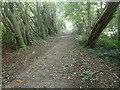 TQ3661 : The London Loop through Puplet Wood by Marathon