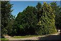 SX8467 : Track junction near Clannon Farm by Derek Harper