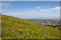 TQ5702 : Downland, summer flowers on Butts Brow, Willingdon, East Sussex by Andrew Diack
