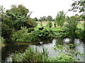 TL9369 : Hippopotamuses at Pakenham Watermill by Adrian S Pye