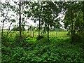 SO8798 : Smestow School Field Scene by Gordon Griffiths
