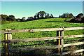 H4863 : Field behind Seskinore Village by Kenneth  Allen