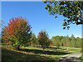 SE2853 : Autumn colour at Harlow Carr Gardens, Harrogate by Malc McDonald