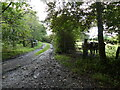 SN0010 : Track junction near Woodhouse, Landshipping Quay, Pembrokeshire by Ruth Sharville