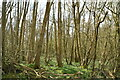 TQ9132 : Frenchay Wood by N Chadwick