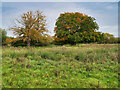 SP9367 : Ditchford Lakes and Meadows Nature Reserve by David Dixon
