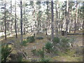 NH9963 : Culbin Forest by Richard Webb