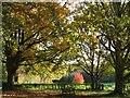 SU5667 : Midgham Green by Pam Brophy