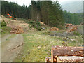 SD2298 : Forestry works on Harter Fell by Stephen Dawson