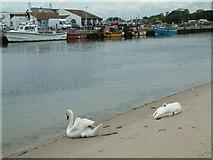 SZ1891 : Mudeford Quay by Stuart Buchan