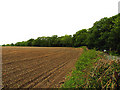 SU5269 : Ploughed Field on old fort ground by Pam Brophy
