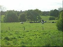 SE2040 : Field at Henshaw, Yeadon by Mark Morton