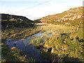 V7334 : Bog Pond on the Peninsula by Pam Brophy