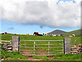 Q3700 : Pasture near Ventry/Ceann Tra by Pam Brophy