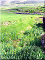 Q3100 : Pasture at Dunquin by Pam Brophy