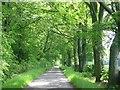 NT1198 : Beech lined lane, Gairney by Richard Webb